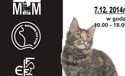 Pokaz kotów rasowych w Tomaszowie