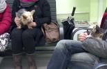 Kastracja zwierząt zapobiega ich bezdomności (wideo)