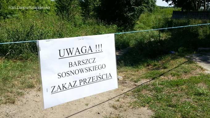 barszcz-sosnowskiego-w-tomaszowie-mazowieckim3