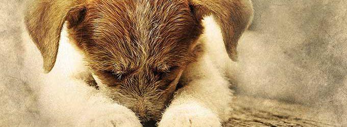 74-latka usłyszała zarzuty znęcania się nad psem