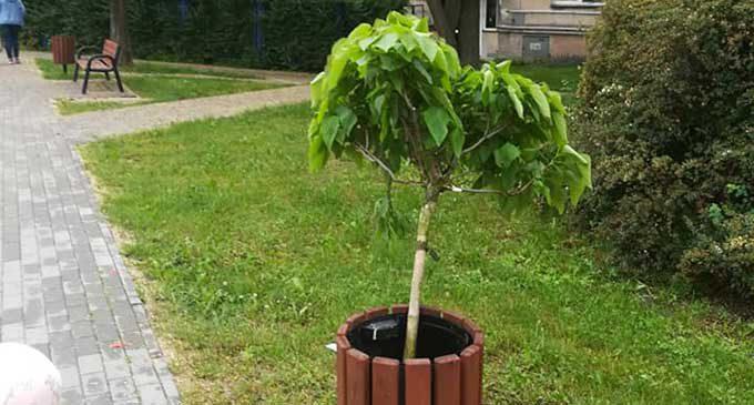 Wandale zniszczyli drzewka przy zbiegu ulic Granicznej i Jana Pawła II