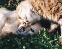 Zbiórka darów dla zwierząt