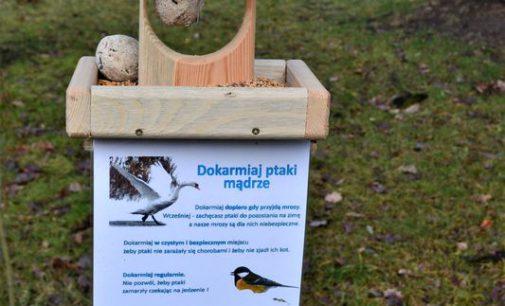 Czym karmić ptaki? Karmniki dla ptaków pojawiły się w tomaszowskich parkach