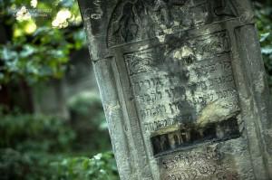 cmentarz-zydowski-tomaszow_007