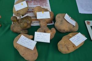 powiatowe swieto ziemniaka (25)